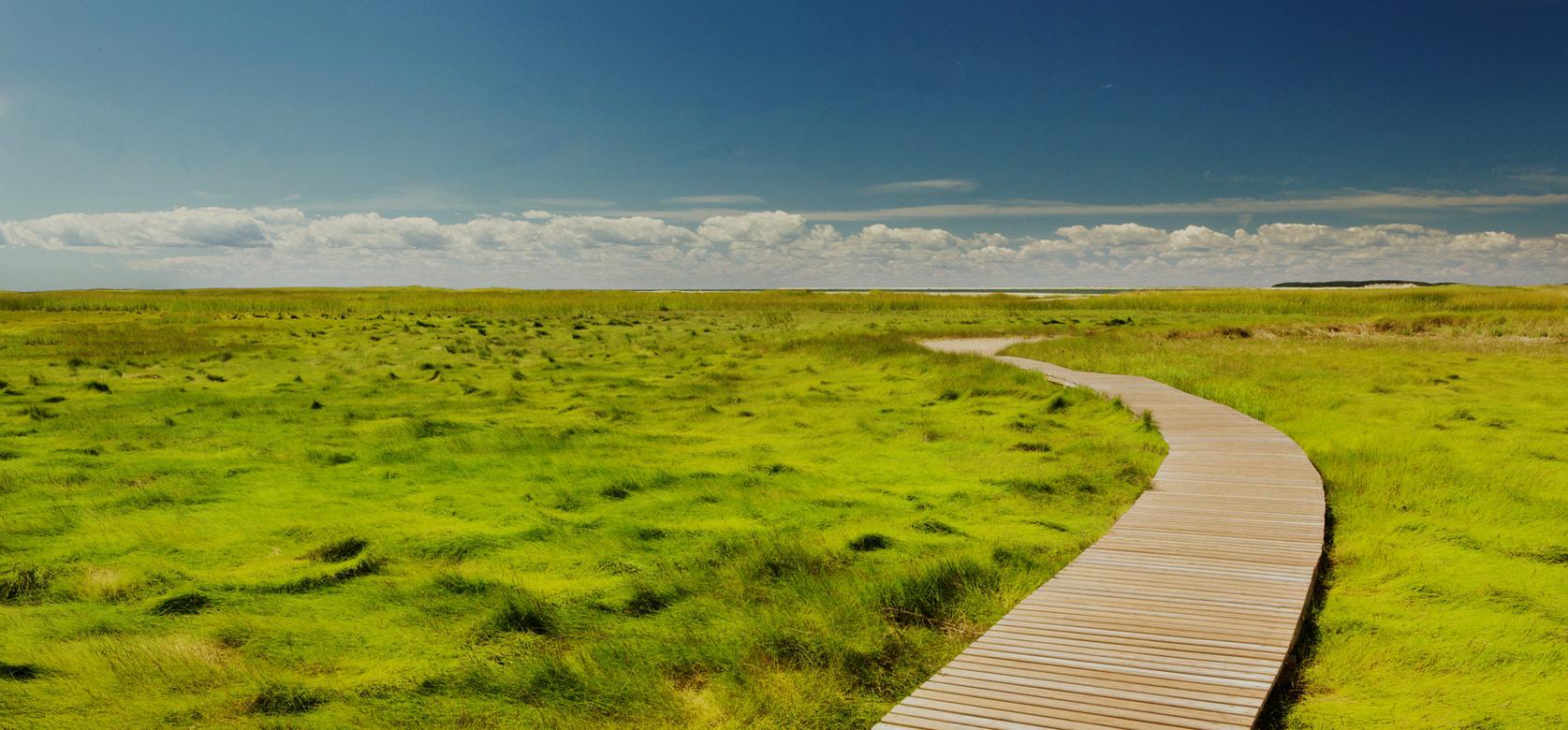 sentiero in legno in mezzo alla natura utile per passeggiare durante un percorso di terapia di coppia